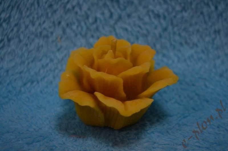 Świeca woskowa róża średnia S03