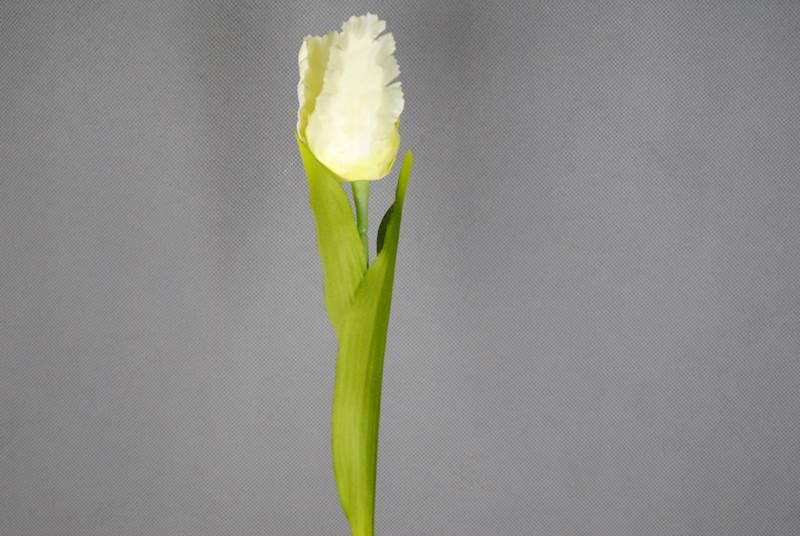Gałązka tulipana