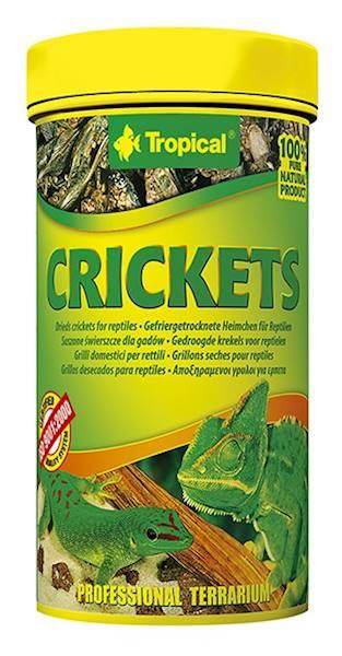 CRICKETS - ŚWIERSZCZE SUSZONE 250ml/25g