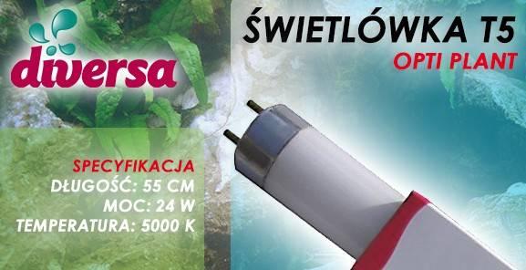 D.ŚWIETLÓWKA OPTI PLANT T5 24W 55cm