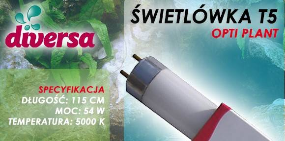D.ŚWIETLÓWKA OPTI PLANT T5 54W 115cm