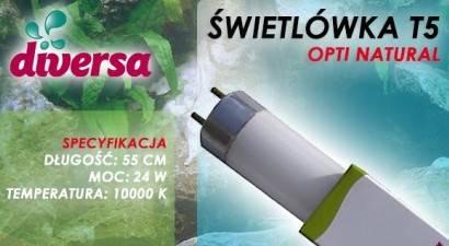 D.ŚWIETLÓWKA OPTI NATURAL T5 24W 55cm