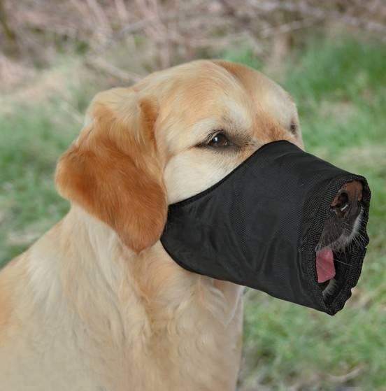 KAGANIEC NYLON Tx XS - S (Jack Russell Terrier)